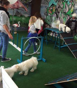 Aktiveringsövningar med hundar